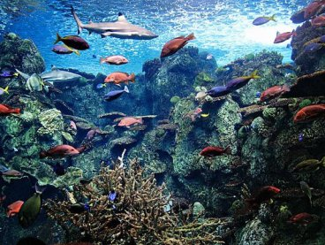 tropical-reef-exhibit_lrg_530_400_85shar-70-5-5_s_c1_c_c_0_0_1